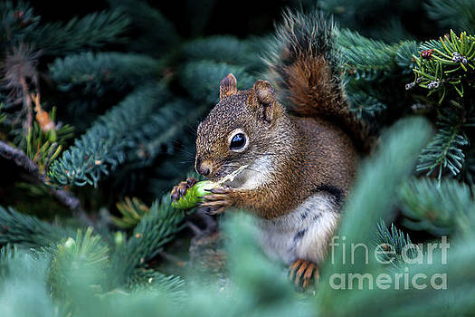 Squirrel by Miro Vrlik