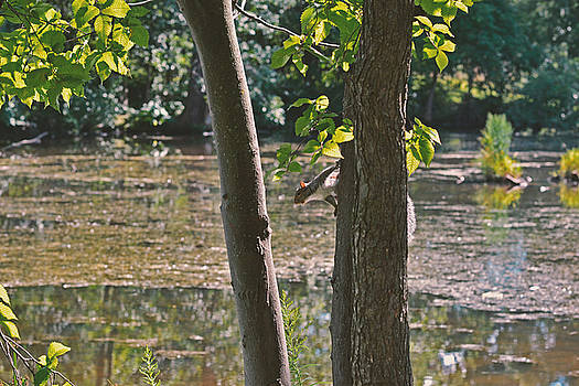 Squirrel of the pond by Asbed Iskedjian