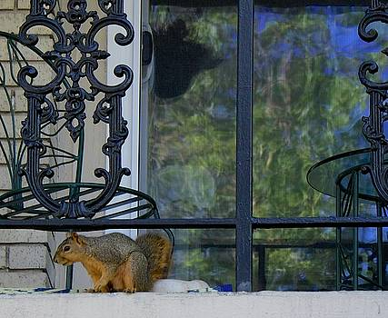 Squirrel on Balcony by Janet K Wilcox