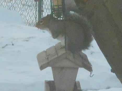 Squirrel On Bird Feeder by Darlene Custer