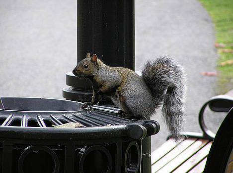 Squirrel on Garbage Can by Richard Mitchell