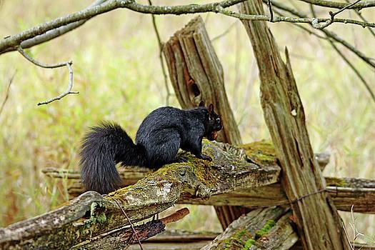 Debbie Oppermann - Squirrel On The Rails