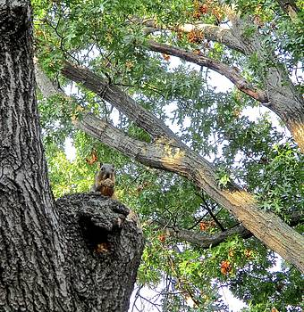 Squirrel on Tree Throne by Janet K Wilcox