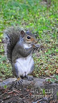 Squirrel Photograph art by Ella Kaye Dickey