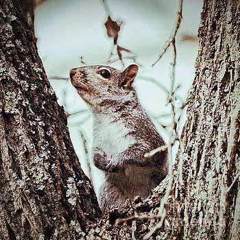 Squirrel Sense by Kerri Farley