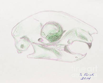 Squirrel Skull by Stefanie Forck