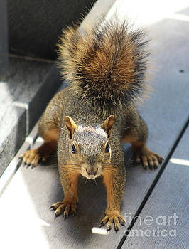 Squirrel Standoff by Inspirational Photo Creations Audrey Woods
