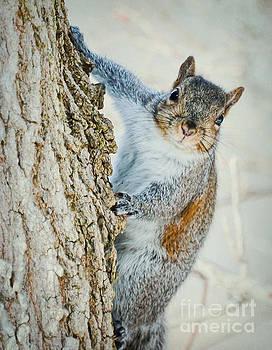 Squirrel Stare  by Kerri Farley