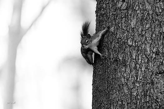 Squirrel Trees Fog by Bob Orsillo
