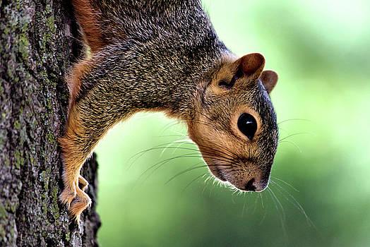 Karen Scovill - Squirrel Wiskers