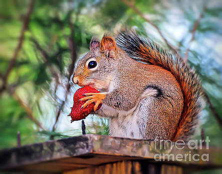 Squirrel with a Strawberry by Kerri Farley
