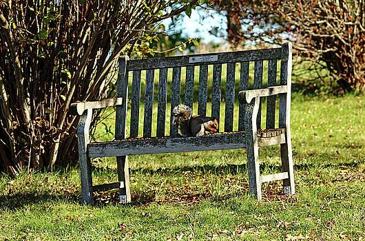 Debbie Oppermann - Squirrels Dining Table