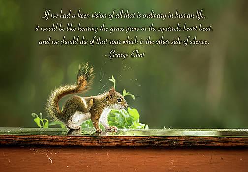 onyonet  photo studios - Squirrel