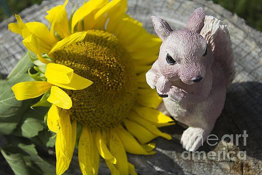 Squirrels Like Sun Flowers by Tara Lynn