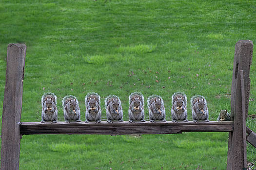 Squirrels lined up by Dan Friend