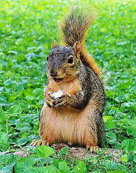 Squirrely  by Angela Weis