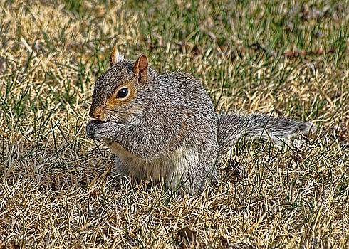 Squirrely by Lanis Rossi