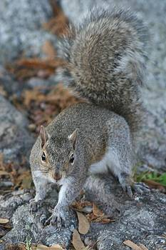 Squirrely by Maria Young