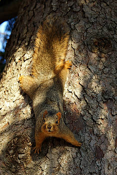 Squirrely by Off The Beaten Path Photography - Andrew Alexander