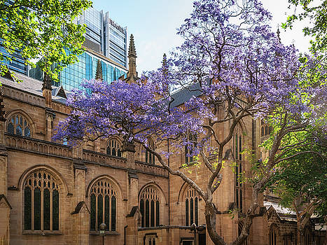 St Andrews Cathedral in spring by Daniela Constantinescu