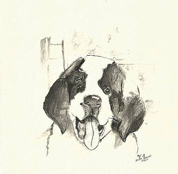 St. Bernard  Puppy by Crystal Webb