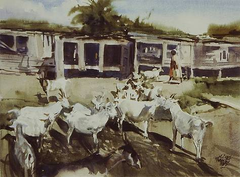 St. Croix Goats by Charles Hawes