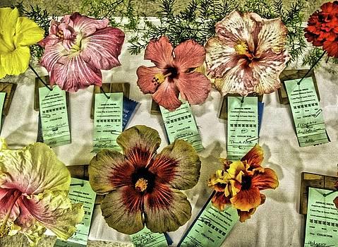St. Croix Hibiscus Show by Sydney Solis