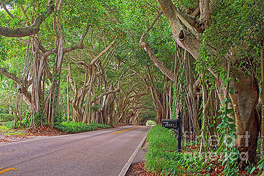 St. Lucie Blvd. Treescape by Larry Nieland