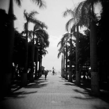 St. Maarten Plaza, Caribbean by Lisa Shea