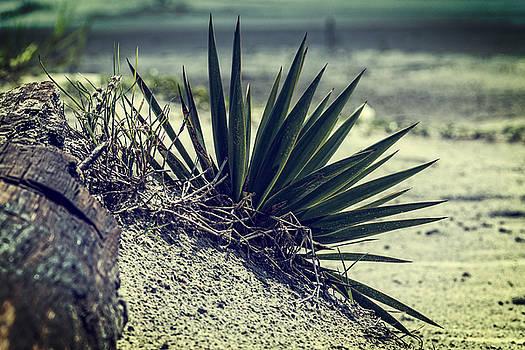 Chris Bordeleau - St. Simons Beach Palms