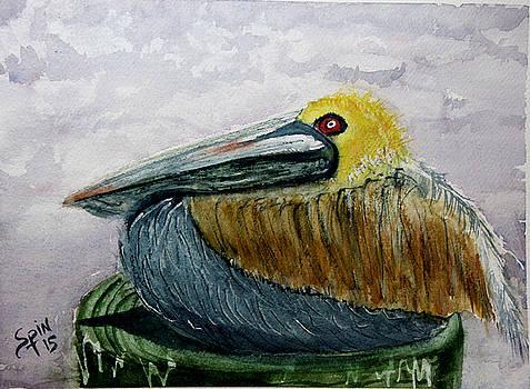 St. Simons Island Pelican by Spencer  Joyner