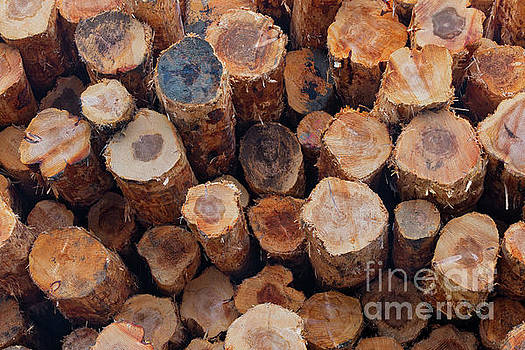Stacked Logs by Jerry Fornarotto
