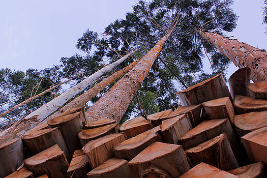 Magdiel - Stacked Wood Tall Trees
