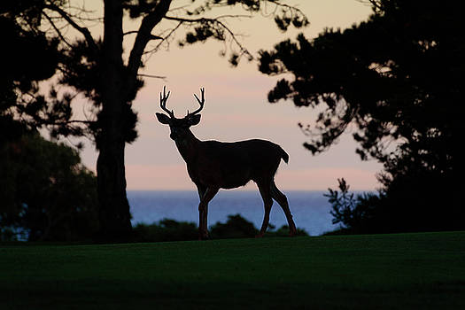 Stag at Sunset by Keith Boone