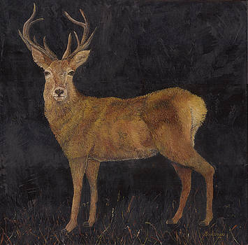 Stag by Linda Clark