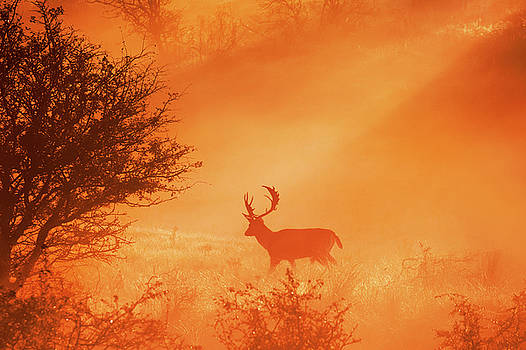 Stag on Stage by Roeselien Raimond