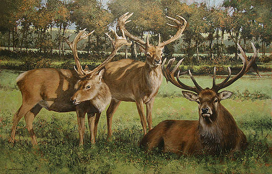 Stags in the Park by David Lyons