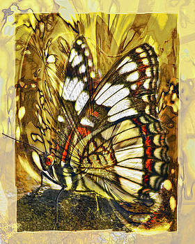Stained Glass Butterfly by Chuck Brittenham