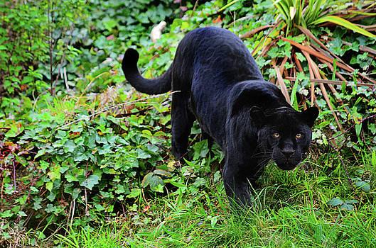 Stalker by Spade Photo