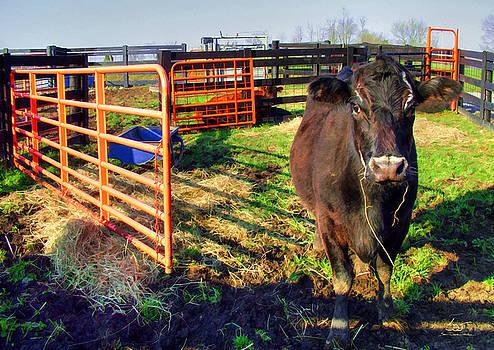 Sam Davis Johnson - Stalled Cow