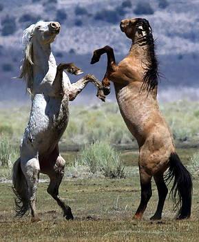 Stallion Fandango by Ron  Romanosky