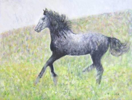 Stallion by Glenda Crigger