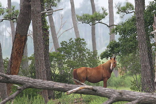 Stallion in the Trees by Stacey Steinberg