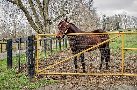 Tony Crehan - Stallion in Winter