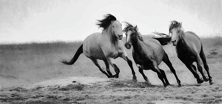 Stallion  by Kelly Marquardt