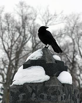 Gothicrow Images - Crow Stance On Cold Stone