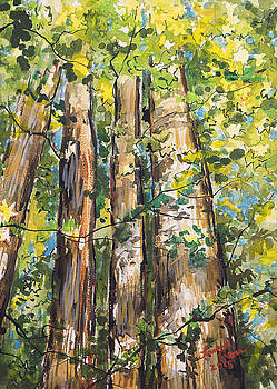 Stand of Sweetgums by Laura Ross
