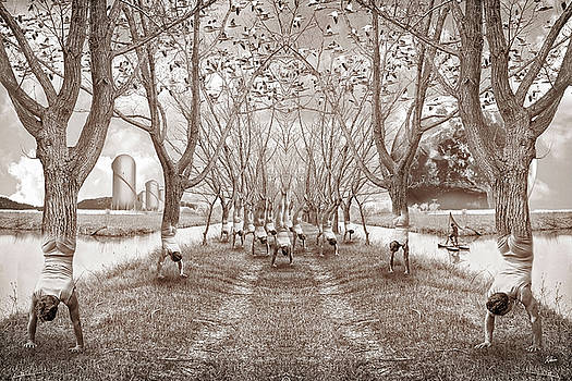 Stand of Trees by Glen Klein