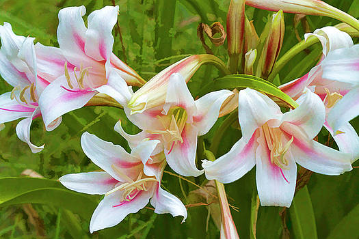 Stand Up And Take Notice Lily by Kathy Clark
