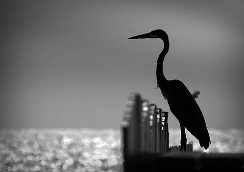 Standing Guard by Kerry Hauser